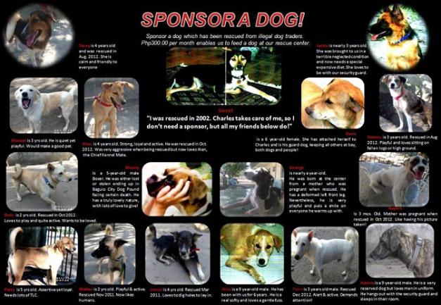 dogsponsor1