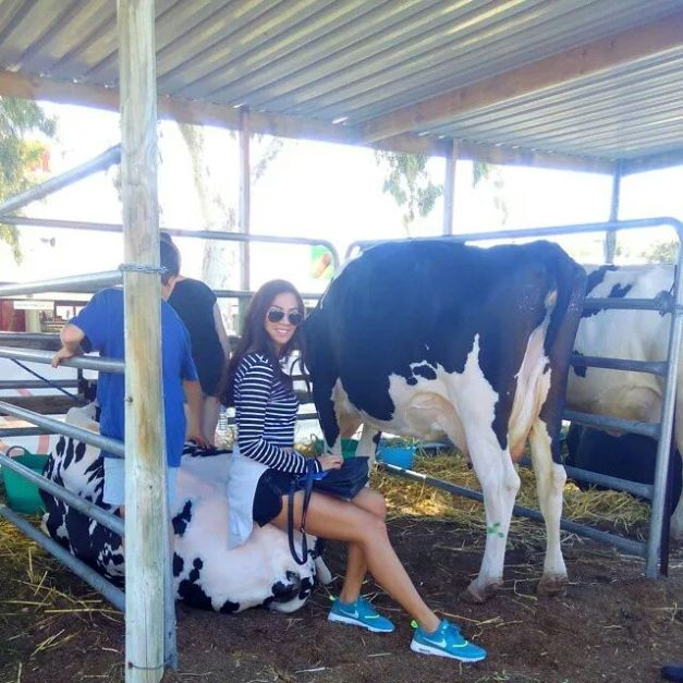 Learning how to milk a cow, our Ara.